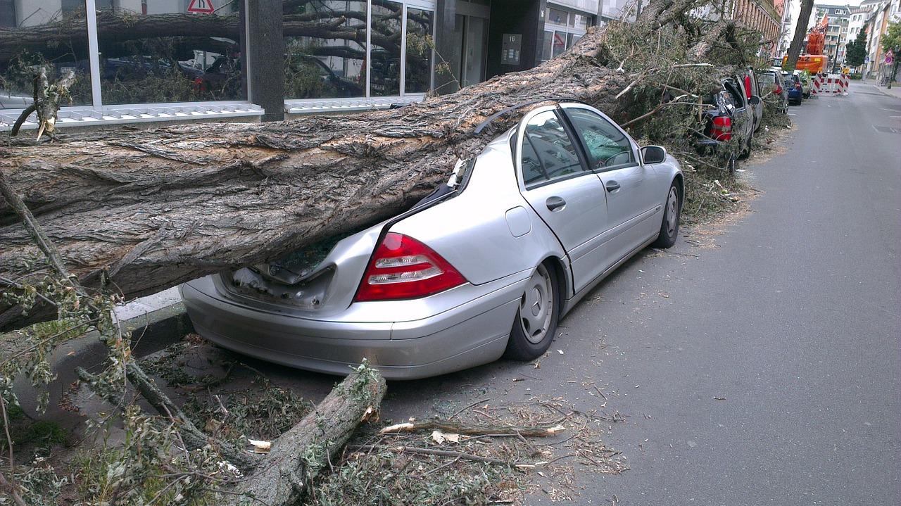 На машину упало дерево: кто возместит ущерб?